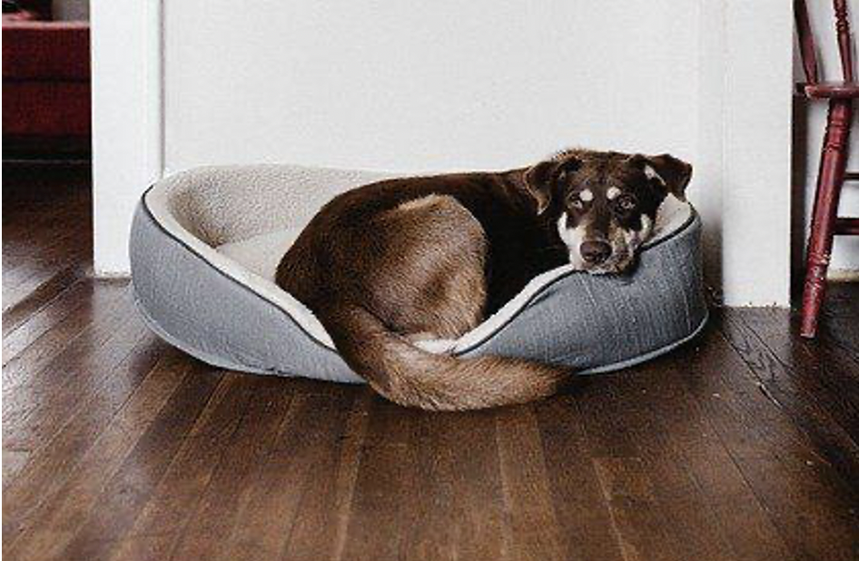How To Treat Your Dog For Good Behavior In This Pandemic