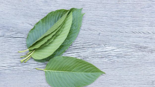10 Reasons Why You Should Use Kratom Capsules Instead of Chemicals to Deal with Any Ailments